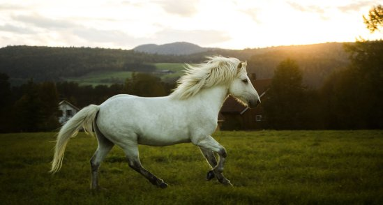 my_white_horse_by_ingridawzm-d6m16px (1)